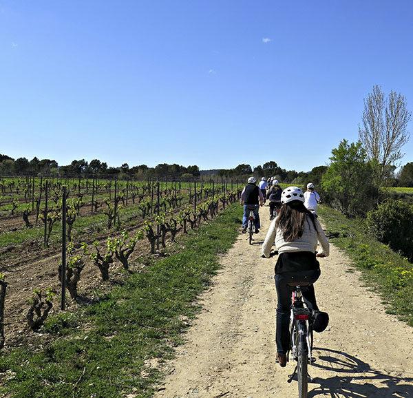 Tour en bici por el Penedes y cata de vinos