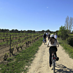 Penedes Wine Tasting and Bike Tour